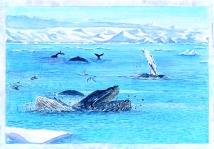 P9 Whales Breaching